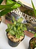 OrchidzDome met set planten_