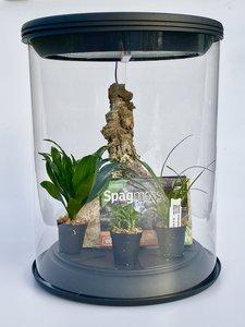 OrchidzDome met set planten