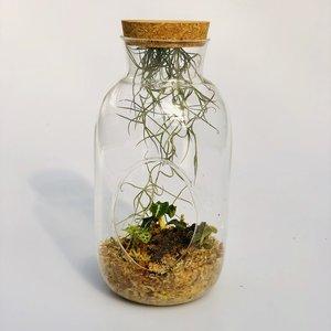 3 jewel orchideeën met glazen vaas en toebehoren