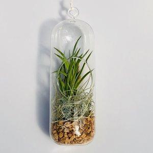 3 x Tolumnia scandens met hangende glazen vaas en toebehoren