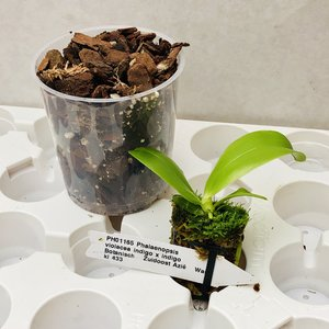 """Projectplantje maart """"Ons Orchideeënhoekje"""""""